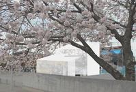 つくばの桜と外観コラージュ - kukka kukka