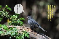 平穏な日! - Weblog : ちー3歩