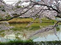 桜舞い散るシリーズのデジブックを公開しました。 - 写真撮り隊の今日の一枚2