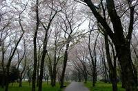 休日写真散歩 - 原宿 表参道 小さな美容室 アロココ