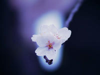 SPOT LIGHT - 1/365 - WEBにしきんBlog