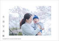 桜の木の下で - JIFF:PHOTOから小鳥写真館へ