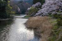 春たけなわの日和田山へ - デジカメ写真集