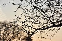 ヴェルニー公園の桜 1 - 素顔のままで