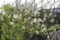 今日の庭から - マミィの花と手づくりの時間