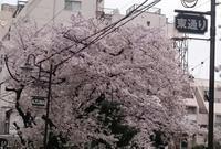 2017、櫻、咲く。-拾弐:法明寺から高戸橋へ - デハ712のデジカメ日記2017