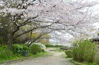 淡彩風景画講座・4月のテーマ「公園を描く」ご紹介 - アトリエTODAYのブログ
