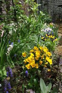 晴れた春の日、お庭の様子 - 美鈴とトラと私とお庭
