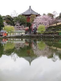 あるく奈良-35 [万葉の春] ① - 奈良公園 - - 続・感性の時代屋