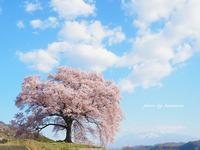 わに塚の桜 - Photographie de la couleur