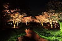 兼六園 ライトアップ 桜 Vol.2 - 今日の空+α2