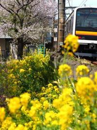 さよなら南武線209系 - 8001列車の旅と撮影記録
