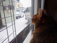 名残雪 - ねこっかぶりねこ2