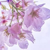 桜  - iPhoneで撮る建築写真 デジカメで撮る建築写真 建築巡礼 建築写真 風景写真 iPhone写真、