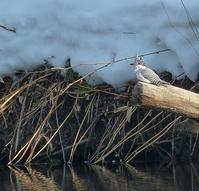 中標津遠征 その10 大トリの鳥。。。 - ピアノ教室の風景