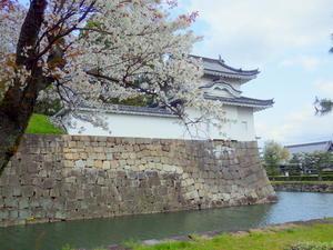 団子より花 - 永源寺のなまぐさイワナ