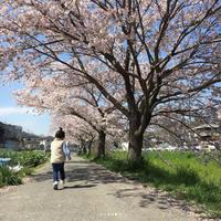 FIRST STANDARD (ファーストスタンダード) 『CYLINDER PACK』 - 奈良県のセレクトショップ IMPERIAL'S (インペリアルズ)