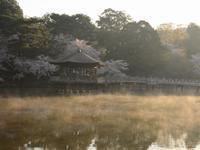 今朝の桜 - 南都☆花模様