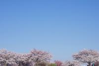 桜日和4 - はーとらんど写真感