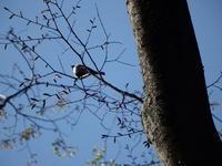 残念な朝、黒川清流公園 - 西多摩探鳥散歩