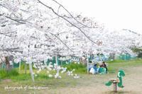 4月12日 桜 @弁天公園 - Precious Days ~ふたりで~Ⅱ
