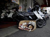 おとなしい犬 - 音舞来歩(IN MY LIFE)