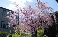 桜幕 - うまこの天袋