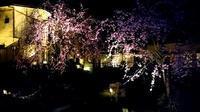 中庭自慢 - 金沢犀川温泉 川端の湯宿「滝亭」BLOG