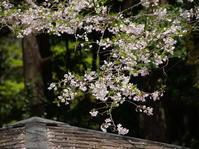 桜もそろそろお終いか - 忠告なんてご無用ぉ
