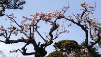 「秋田の春?!」+「ユチョン君、結婚!」4/13(木) - あばばいな~~~。