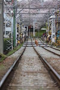 都電荒川線の桜 - デジカメ持ってING