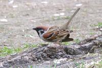 今季初!キビタキ&コマドリ - 野鳥写真日記 自分用アーカイブズ