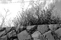 桜端月 寫誌 ⑧ 菜花の風景 - le fotografie di digit@l