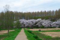 がま田の桜 - 四季折々に・・・・・