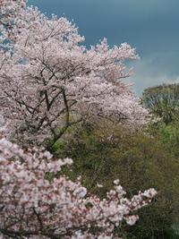 里山の春 - まほろば 写真俳句