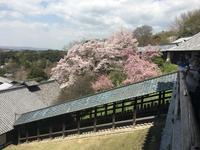 二月堂の桜 - TAKE IT EASY