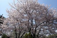 『アジサイ展』開催中です♪ - 手柄山温室植物園ブログ 『山の上から花だより』