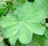 フラワーレメディコース2017の日程のお知らせ - 英国認定メディカルハーバリストのブログ /        Medical Herbalist's Blog