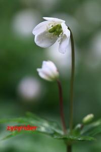 白い恋人 - ジージーライダーの自然彩彩