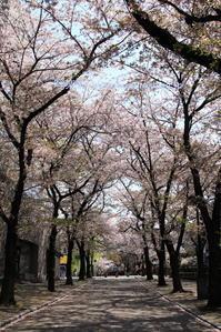 祇園白川へ行く2 - 写楽彩