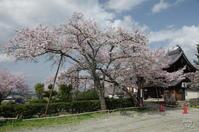 明日香 橘寺 - ぶらり記録(写真) 奈良・大阪・・・