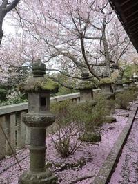 **桜とハナカイドウとムスカリ - milfle なブーケ