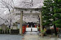 桜便り2017 雨の日の桜@六孫王神社 - デジタルな鍛冶屋の写真歩記