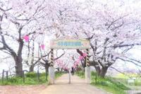 幸手・権現堂公園 - Photolog
