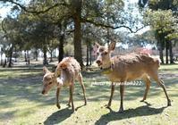 VS 鹿 - nyaokoさんちの家族時間