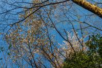 お山は花盛り - デジカメ写真集