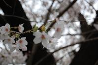 4/17(月)LIVE@star pine's cafe - Message from ari