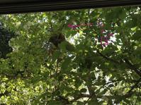 小鳥の巣のオーナーは - 幾星霜Ⅱ
