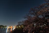 桜を求めて・・・二夜目 - Tom's  OM-D
