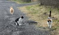 猫放牧(散歩)久々 - 標高480mの窓からⅡ